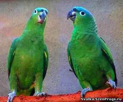 Вольерные птицы могут быть разделены на...